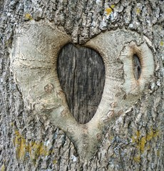 Wooden heart on the tree