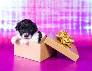 Kleiner Hundewelpe in Geschenkschachtel