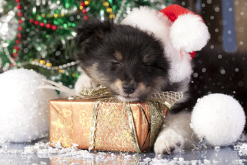 puppy sleeps on the New Year's gifts