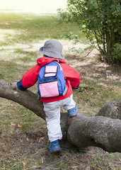 Child climbing over tree