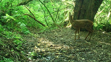 Wild Roe Deer And Fawns