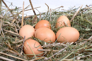 six eggs in the straw