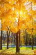 Tree in sunny autumn park