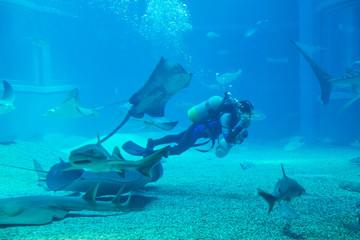 diver cleans aquarium