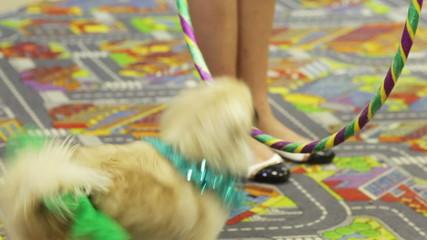 Jumping circus dog