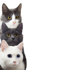 cats on a white background isolated