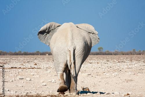 Fotobehang Ezel elephant back
