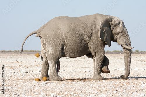 Foto Spatwand Ezel elephant back