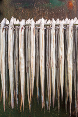 Rack with fresh smoked eel in The Netherlands