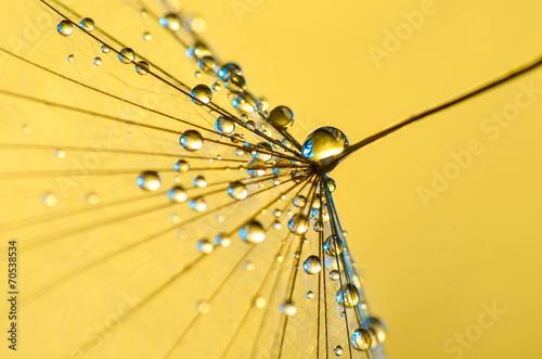Frische Tropfen auf Gold © Goldengel
