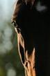 Strahlendes Pferdeauge
