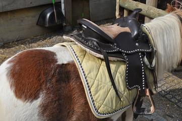 geflecktes Pony mit Sattel