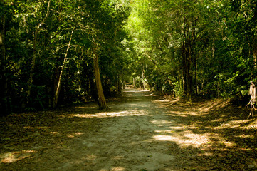 green forest path in tikal park guatemala