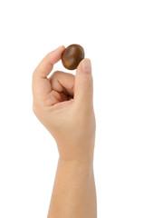 Chestnut in hand