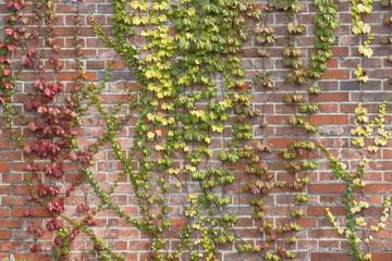 植物とれんが壁 Leaf and stone wall background