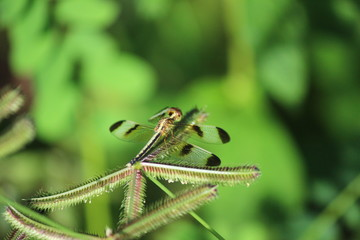 Dragonflies are the afternoon sun