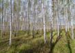 Forest landscape.