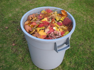 A plastic trash container full of yellow and read leaves