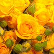 canvas print picture - close up of yellow roses on the market