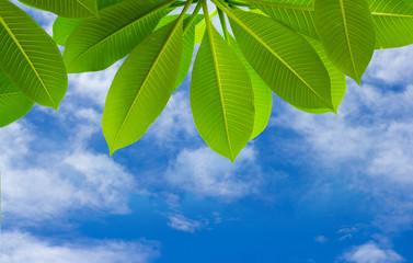 Spring season background of green leaves