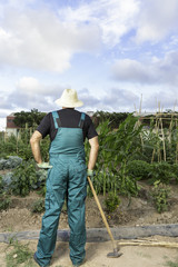 farmer looking his urban vegetable garden