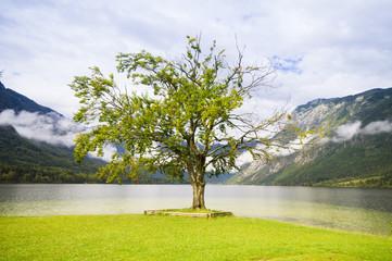 samotne drzewo na brzegu jeziora Bohinj,Słowenia
