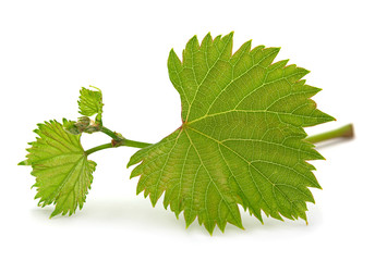Grape leaf bunch