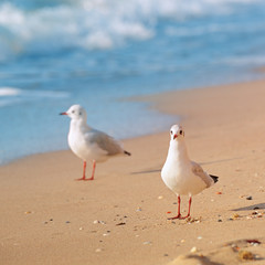 seagulls, sea and sandy beach