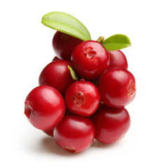 Forest berry cowberry