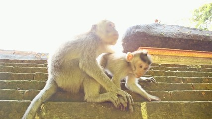 two monkeys in the sun