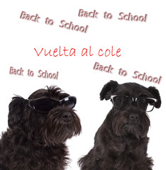 dog returning to school