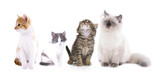 Collage of cute cats isolated on white - 70552926