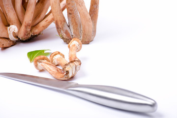 knife and honey fungus on white