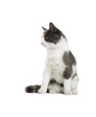 cat looking sideways