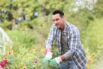 Man in botanic garden cutting roses