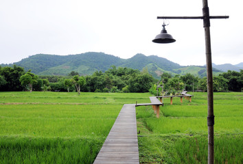 Wood path over rice fields