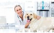 Composite image of female veterinarian examining dog