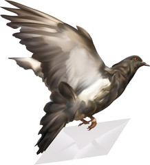 black dove with mail illustration