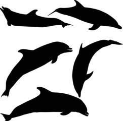 five dolphins isolated on white