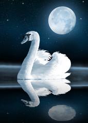 Swan on the lake in the night sky.