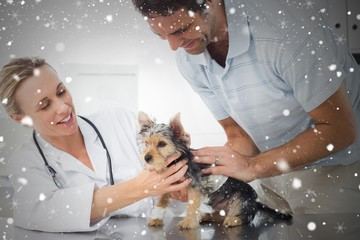 Composite image of vet examining puppy with man
