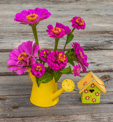 Zinnia flowers in a decorative watering can  on a wooden table