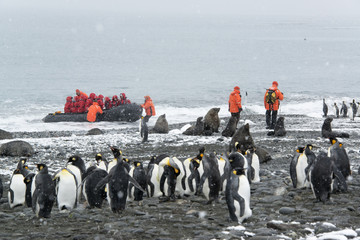Travellers in bright orange waterproofs observing a group of king penguins and a fur seal on South Georgia Island.