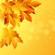 Fall Leaf. Vector Illustration