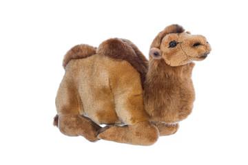 Stofftier Dromedar oder Kamel isoliert auf Weiß