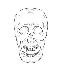 skull with vampire teeth, sketch