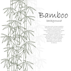 Bamboo background white