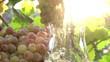 Grape Juice and Sun