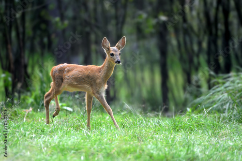 Aluminium Ree Young deer in forest