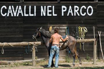 cavalli nel parco